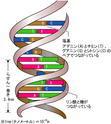 デジタルな遺伝子