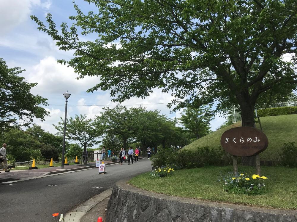 f:id:kawaturu:20190516000434j:plain
