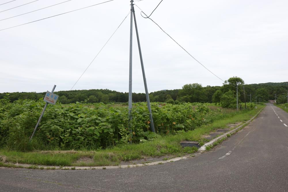 f:id:kawaturu:20190611200935j:plain