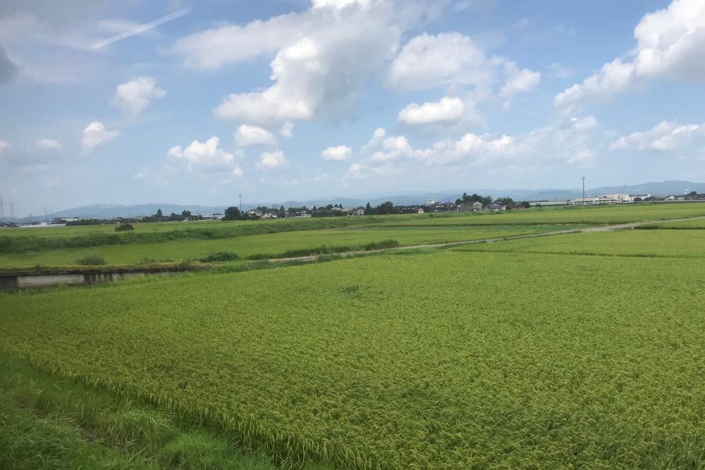 f:id:kawaturu:20200802234040j:plain