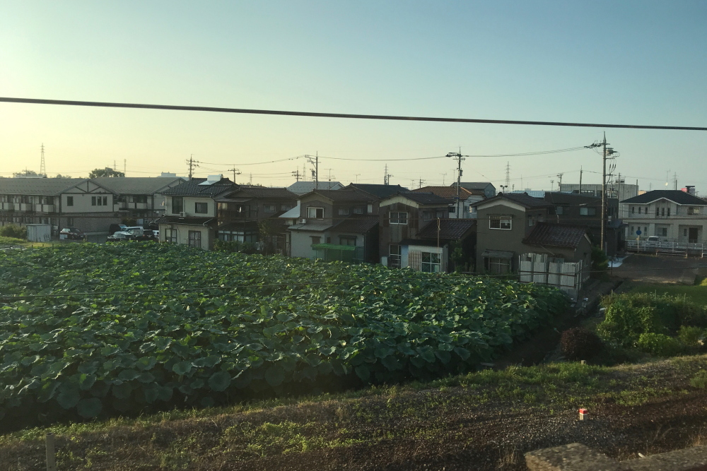 f:id:kawaturu:20200813212618j:plain