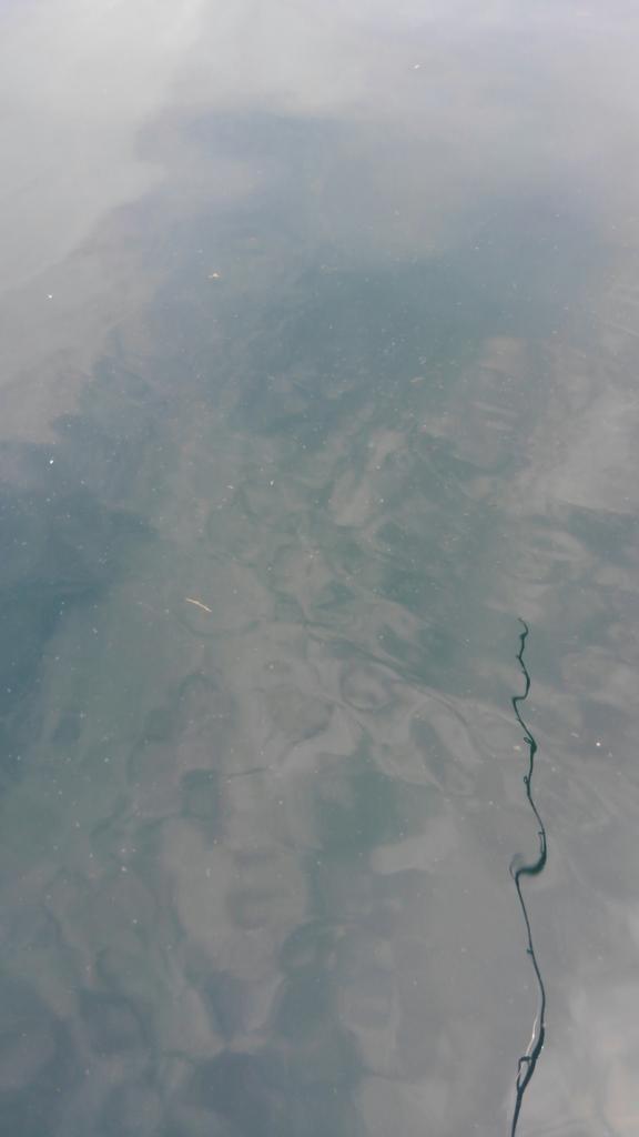 伊豆の真鯛釣りで赤潮に遭遇