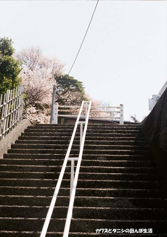 f:id:kawazutanishi:20210405230654j:plain