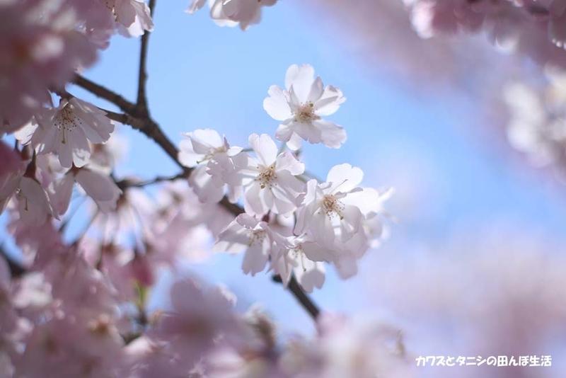 f:id:kawazutanishi:20210417225837j:plain