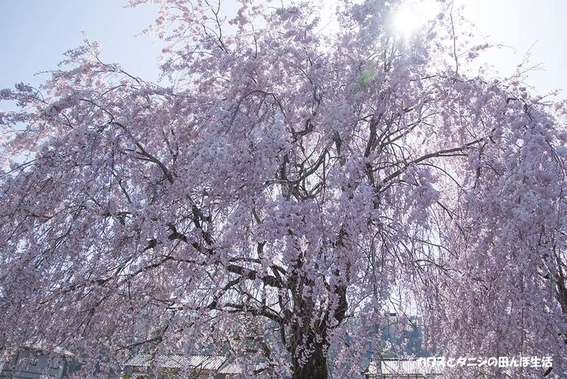 f:id:kawazutanishi:20210417225855j:plain