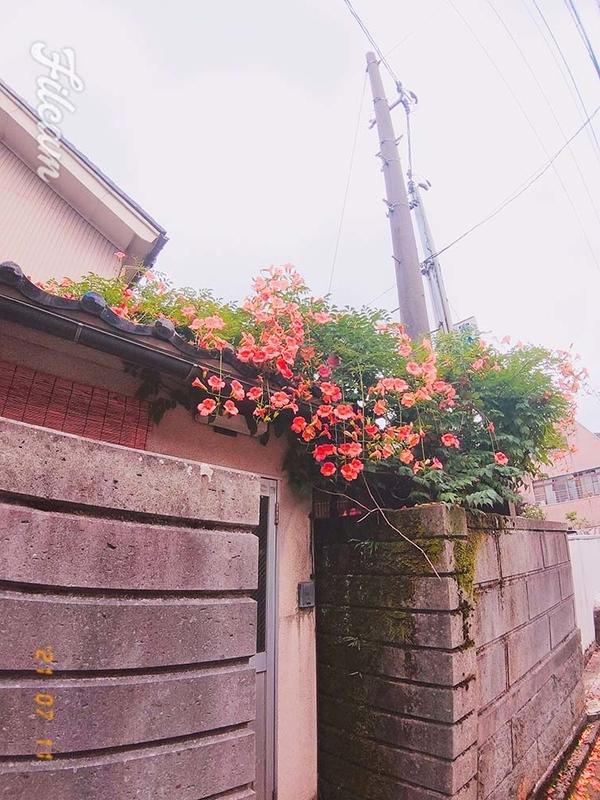 f:id:kawazutanishi:20210715192841j:plain