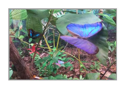 熱帯ジャングルのジオラマ