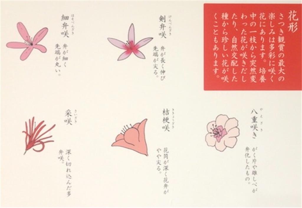f:id:kayoko_cafe:20210530161309j:image