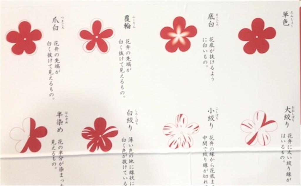 f:id:kayoko_cafe:20210530161946j:image