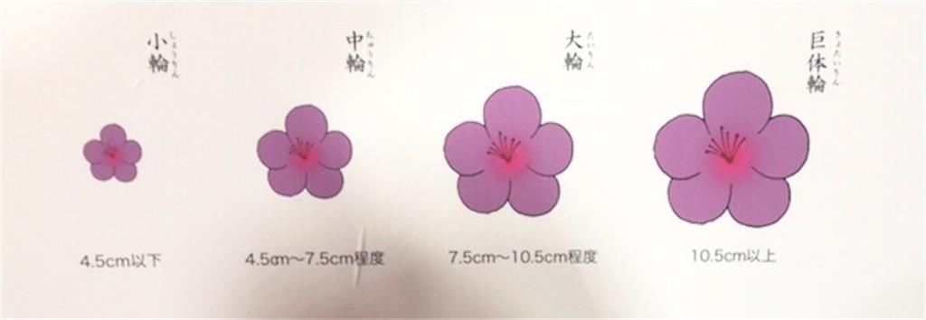 f:id:kayoko_cafe:20210530162734j:image