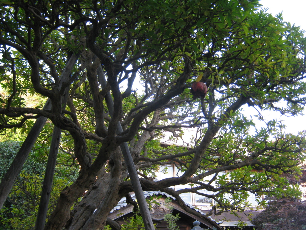 f:id:kaz-mt-wisteria:20171104165018j:plain