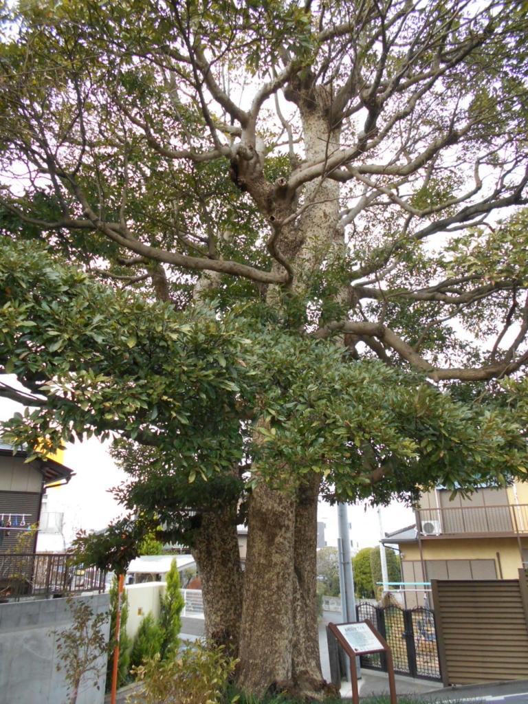 f:id:kaz-mt-wisteria:20171228233533j:plain
