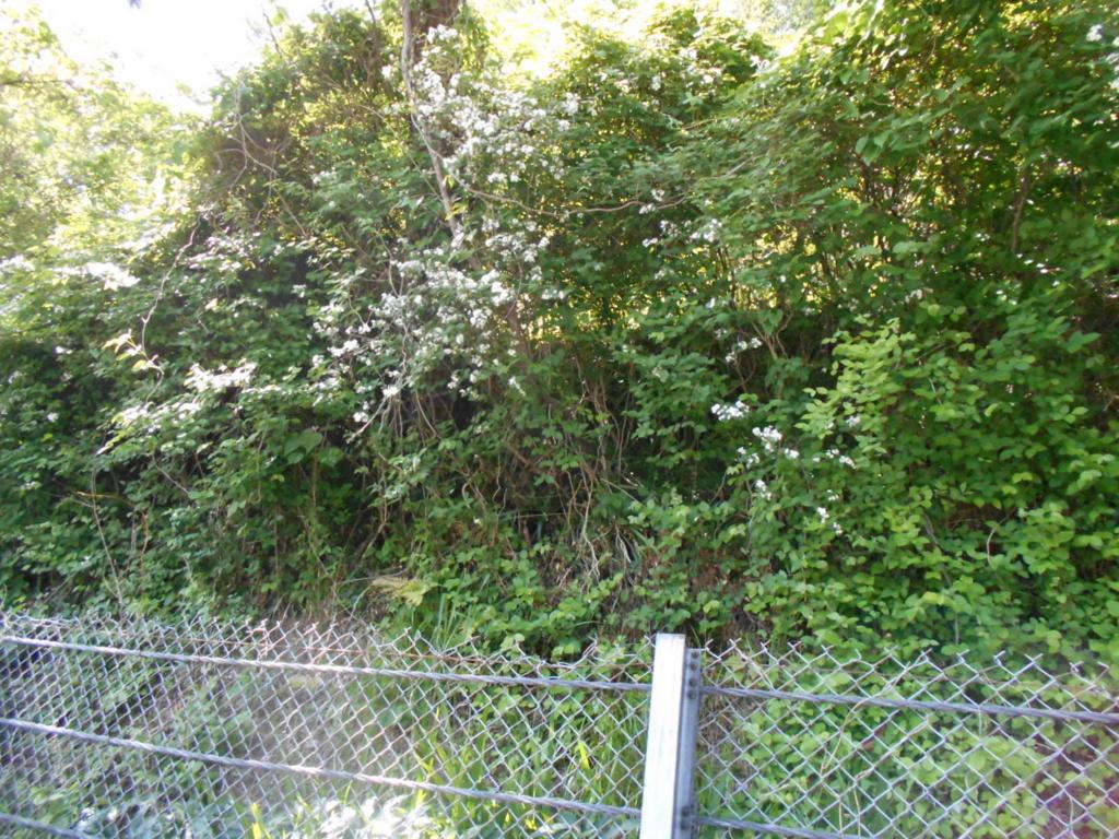 f:id:kaz-mt-wisteria:20180506000525j:plain