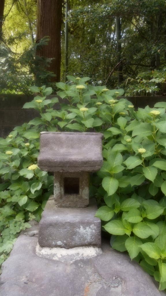 f:id:kaz-mt-wisteria:20180521000242j:plain