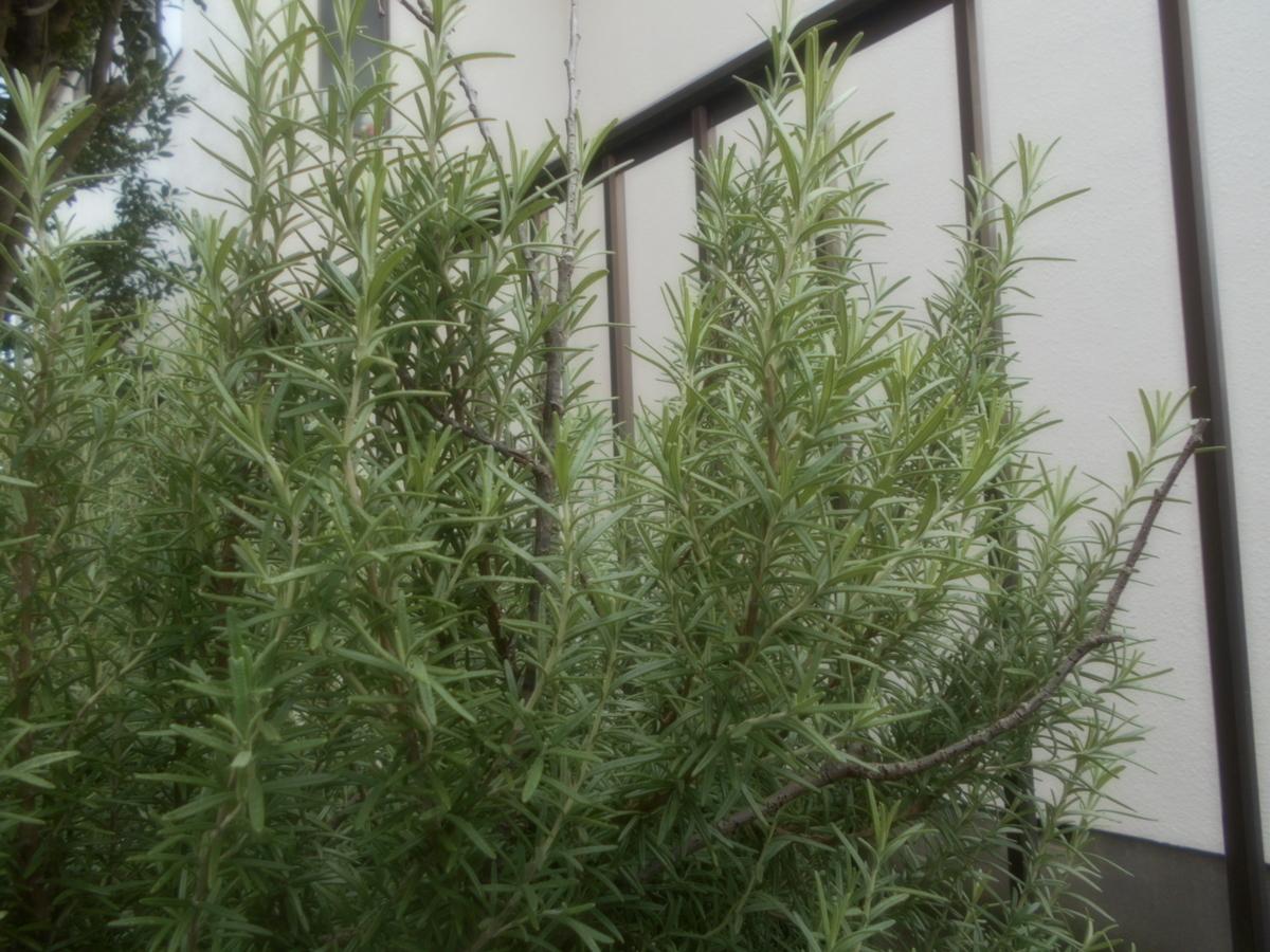 f:id:kaz-mt-wisteria:20191019165318j:plain