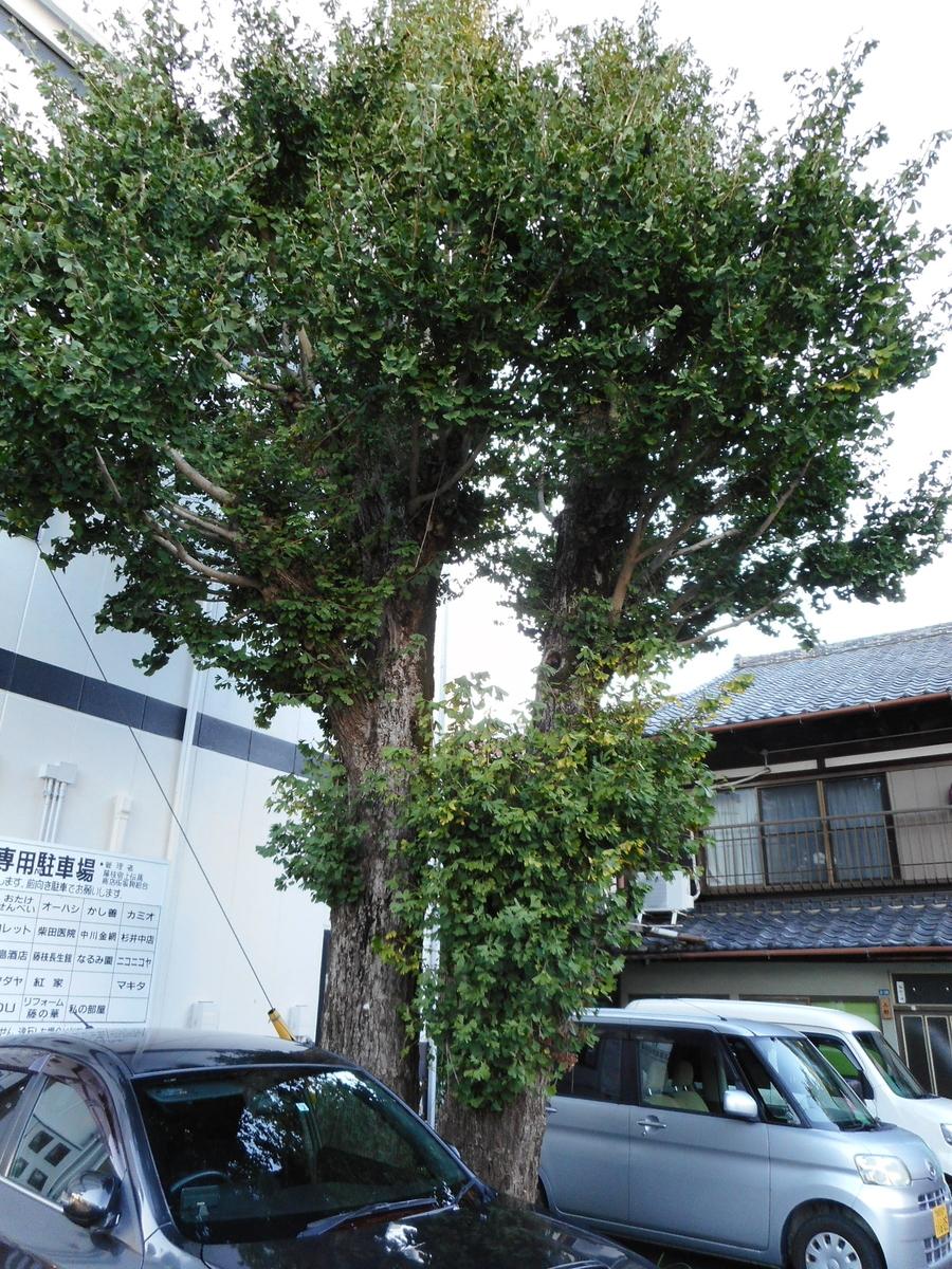 f:id:kaz-mt-wisteria:20201116230543j:plain