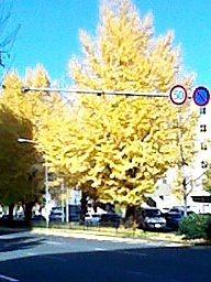 f:id:kazaguruma-87:20141130103416j:image:right
