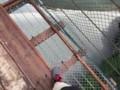 谷瀬の吊橋1