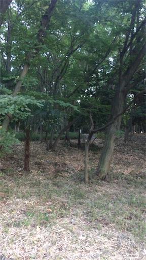 f:id:kazamakun1214:20160910201234j:image