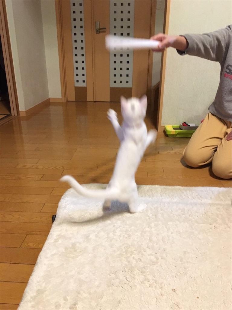 f:id:kazanehime:20171121115833j:image