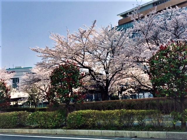f:id:kaze_no_katami:20180329144334j:plain