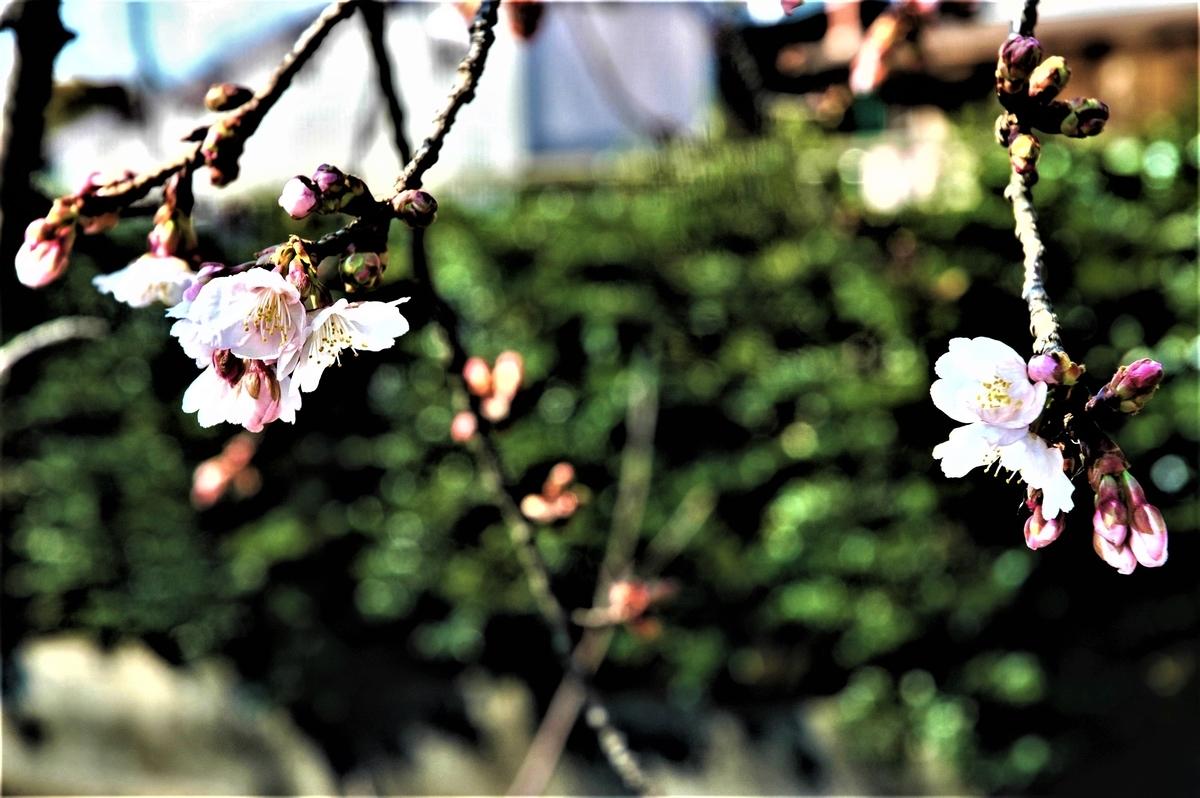f:id:kaze_no_katami:20200225084203j:plain