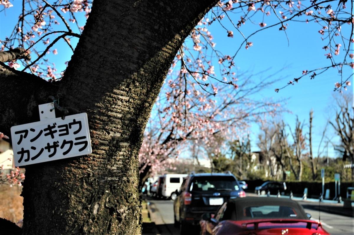 f:id:kaze_no_katami:20200227091244j:plain