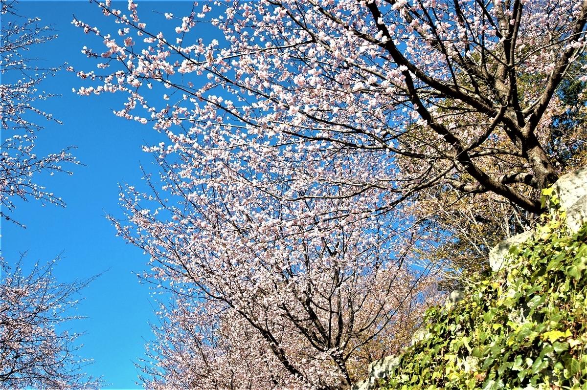 f:id:kaze_no_katami:20200228093957j:plain