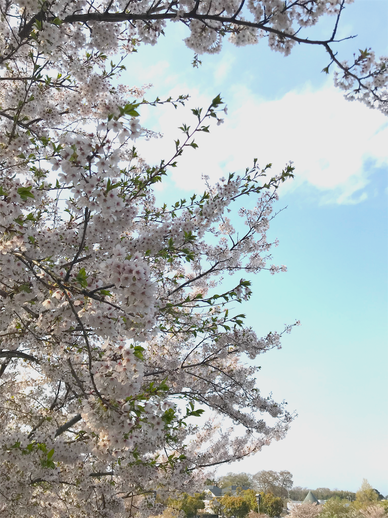 f:id:kazeno-uta:20180409162747p:image