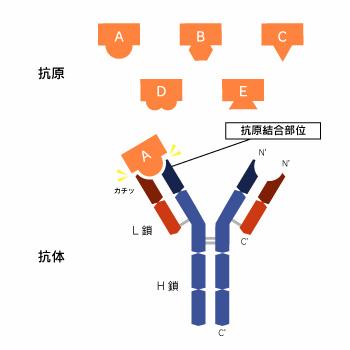 f:id:kazeno-yuh:20200425021046j:plain