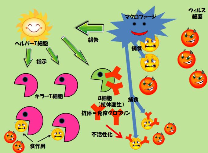 f:id:kazeno-yuh:20200425024314j:plain