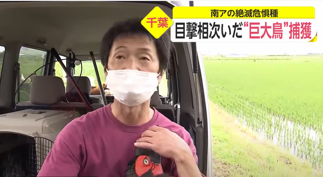 f:id:kazeno-yuh:20210605221532j:plain