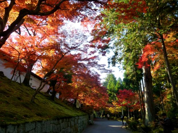 http://kazenokomichi.hatenablog.jp/entry/2013/11/23/185229