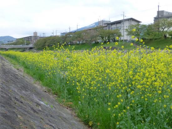 f:id:kazenokomichi:20140422010909j:plain