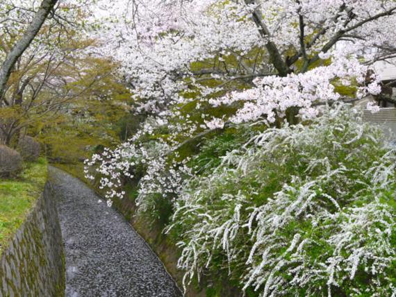 f:id:kazenokomichi:20150411080257j:plain