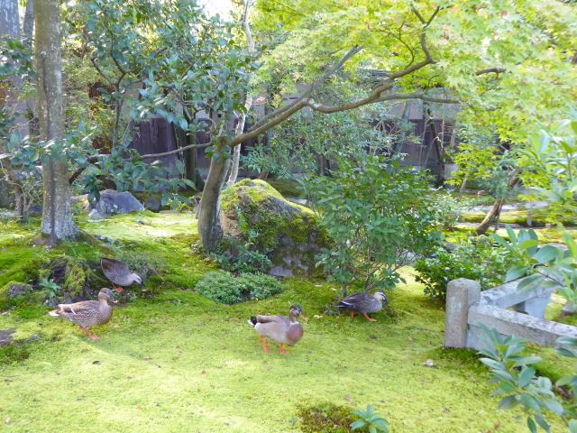 f:id:kazenokomichi:20151118005935j:plain