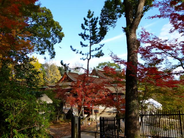 f:id:kazenokomichi:20151206181247j:plain