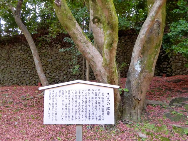 f:id:kazenokomichi:20151206184736j:plain