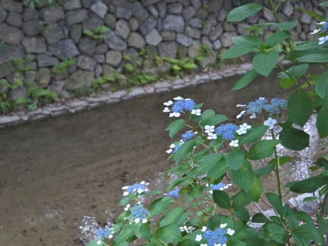 f:id:kazenokomichi:20160614225900j:plain