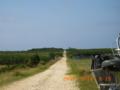 うりずん波照間島の日本一のキビ(2005.5.18)