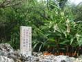 うりずん波照間島オヤケアカハチ生誕の地2005.5.18