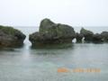 大神島・東海岸のウミヘビに遭遇(2005.5.20)