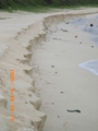 伊良部島南部の渡口の浜、台風で砂浜が大きく削られた