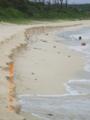 伊良部島・渡口の浜・台風による砂浜侵食(2005.06.18)