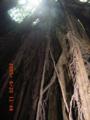 沖縄本島南部・玉城・ガンガラーの谷(2005.06.20)