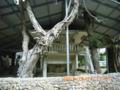 多良間島・土原ウバム(御嶽)にて八月踊りでは仲筋集落の舞台へ