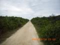 久高島の海へ続く道