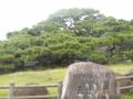 久米島・五枝の松