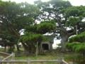 久米島・山里・五枝の松