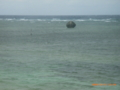 多良間島のシュノーkrツポイントのリーフを・・・